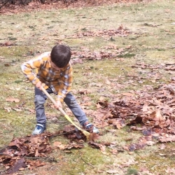 A young boy rakes leaves