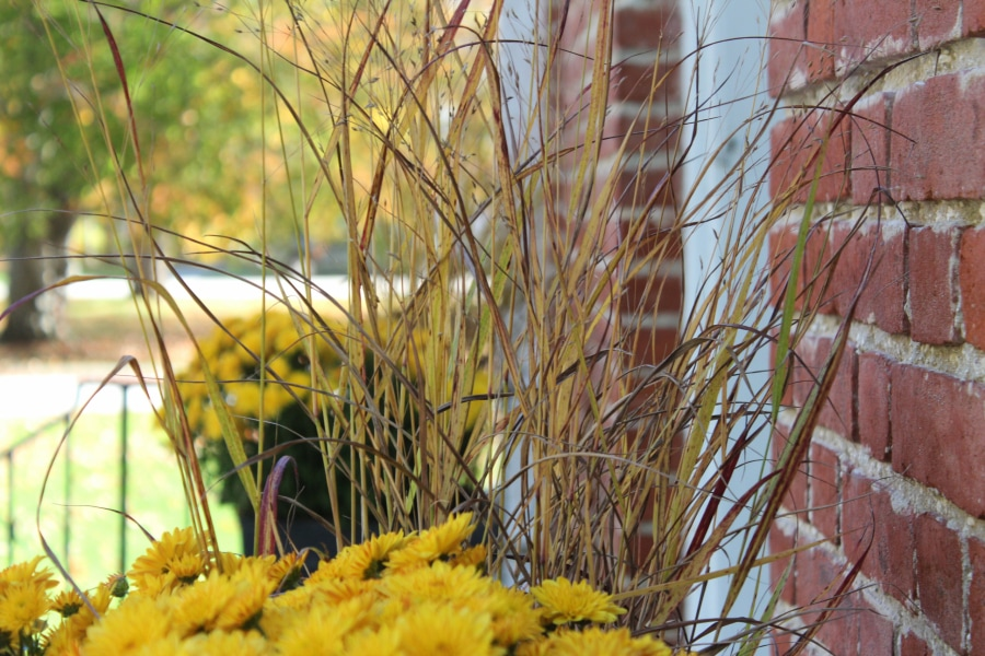 Decorative autumn grasses and flowers